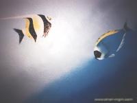 Fische Wrack2